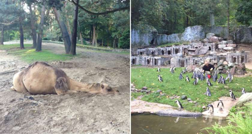 Gdansk-zoo-collage-blogg