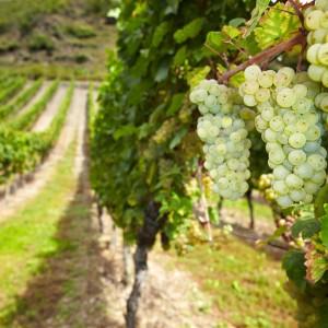 shutterstock_126160421_wine