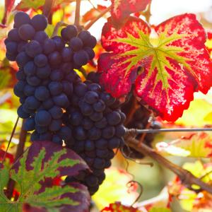 shutterstock_222462247_wine