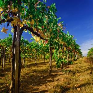 shutterstock_92167024_wine3