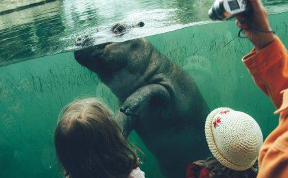 Två flickor kollar på flodhästunge på zoo.