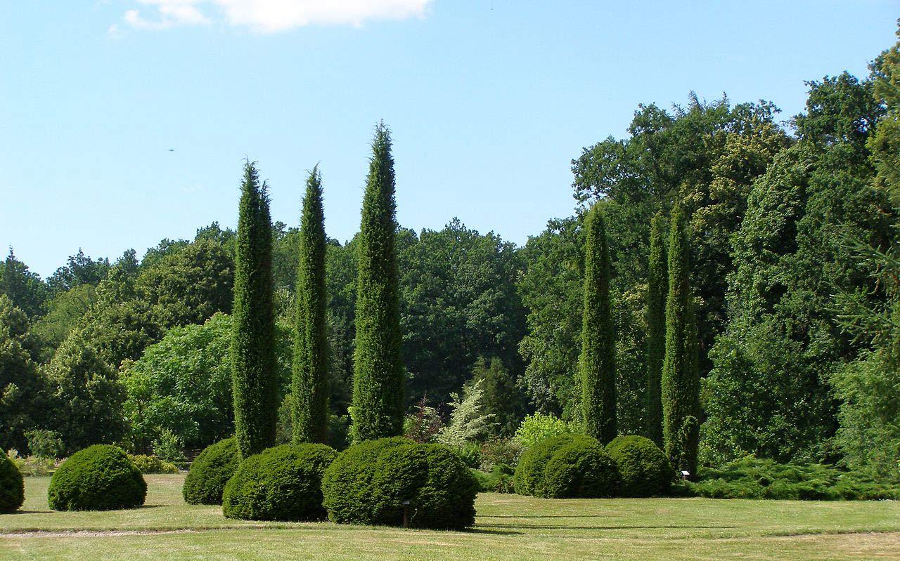 Trädgård i Polen med träd och buskar